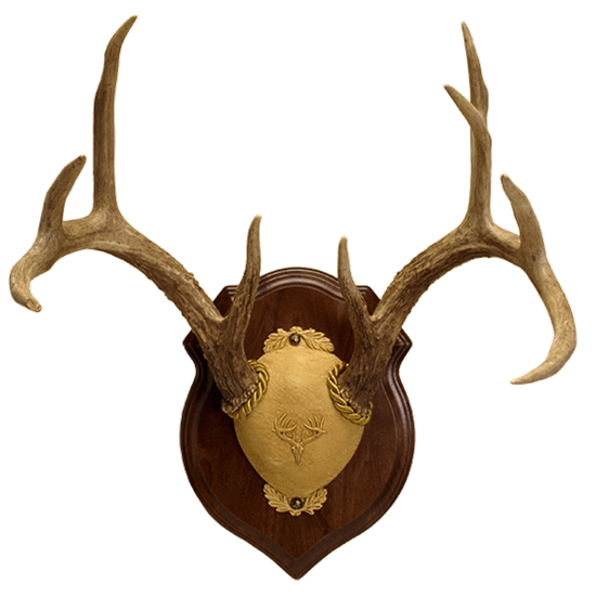 Deluxe Antler Display Kit | Walnut Hollow - Country