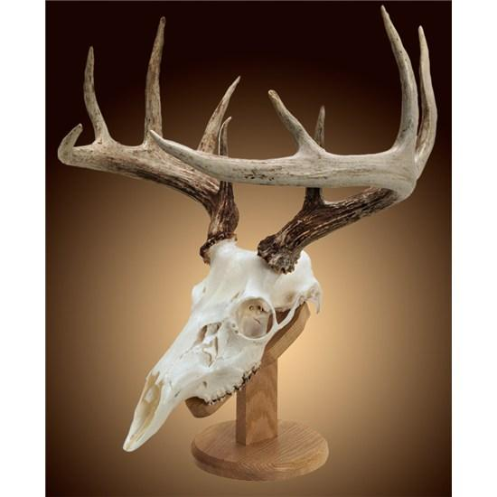 Solid Oak Skull Mount Kit