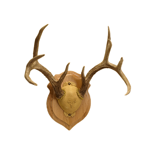 Deluxe Antler Display Kit