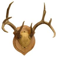 Solid Oak Skull Mount Kit | Walnut Hollow - Country
