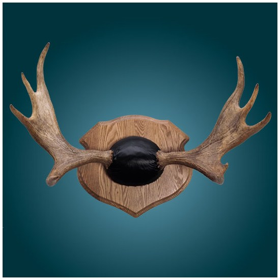 Moose Plaques | Walnut Hollow - Country