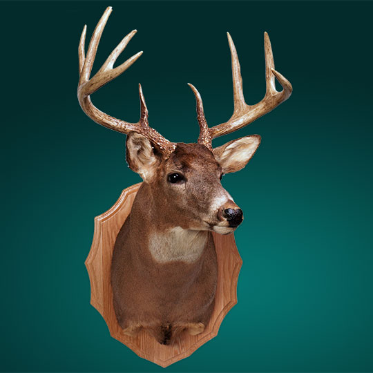 Arrowhead-Oak-Taxidermy-Plaque-Deer-Mount