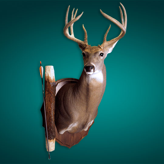 Arrowhead-Walnut-Taxidermy-Plaque-Deer-Mount