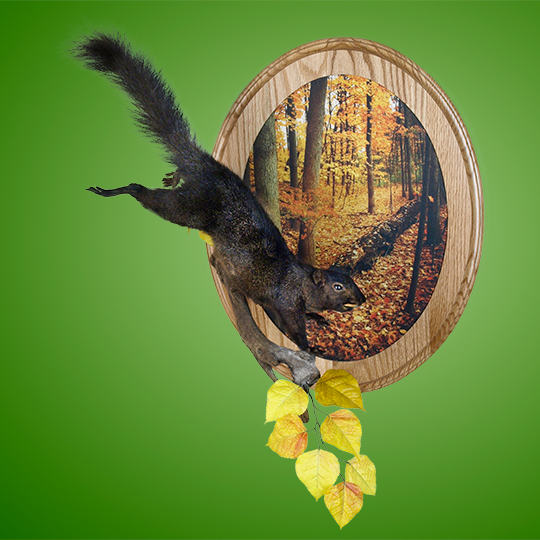 Autumn-4-Scenic-Wall-Plaque-Taxidermy-Mount-38997
