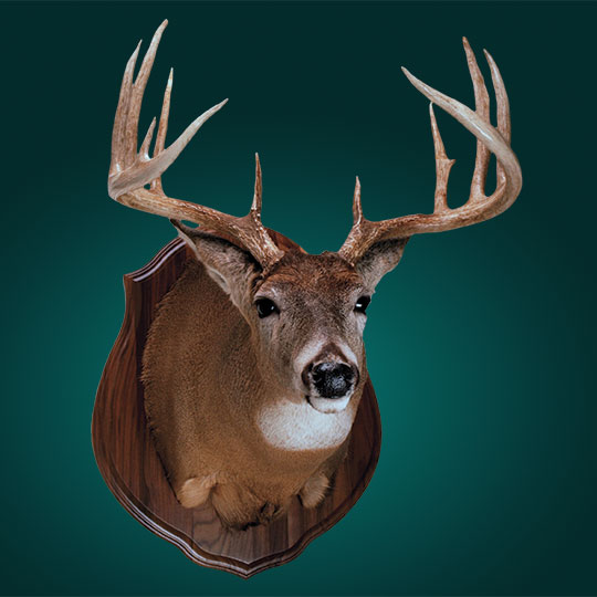 Classic-Walnut-Taxidermy-Plaque-Deer-Mount