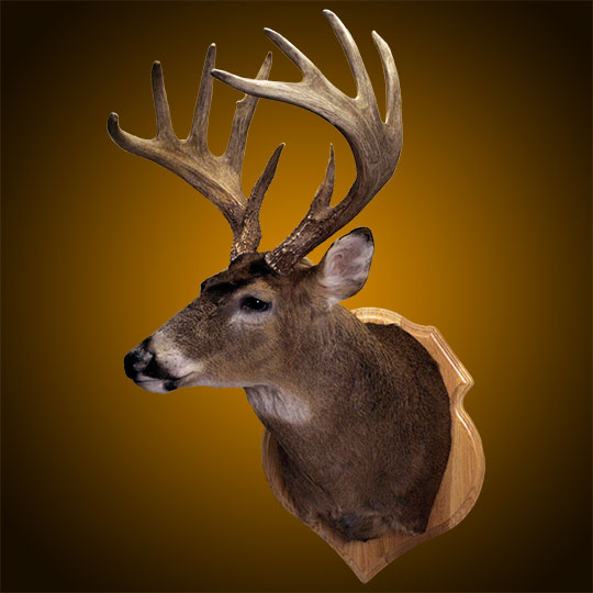 Crest-Oak-Taxidermy-Plaque-Deer-Mount
