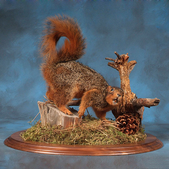 Fox-Squirrel-Mike-Briganti