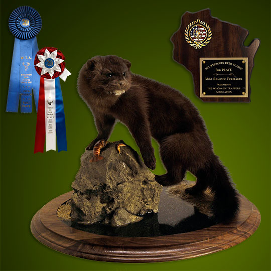 Round-Taxidermy-Base-Walnut-Mink-Mount