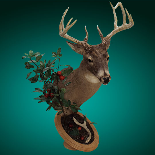 Universal-Taxidermy-Display-Bracket-Oak-Apple-Tree-Deer