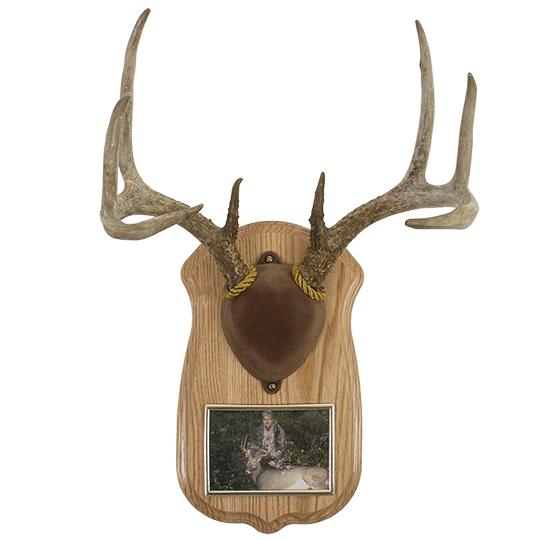 Deluxe Antler Display Kit With Photo Frame Walnut Hollow