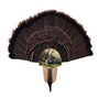 Turkey-Display-Kit-Mount-Taxidermy