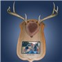 Antler Mount Personalized Kit Taxidermy Deer Hunting