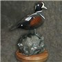 Harlequin | Mount by Cheri Guinn-Cheri's Taxidermy | Thick Walnut Round Flat Base