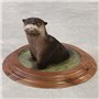 Otter | Mount by Jesse Haese–Haese Taxidermy | Walnut Two Tier Round Base