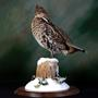 Grouse | Mount by Travis Mcleod–Waterfowl Taxidermy | Walnut Round Base