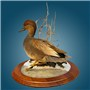 Gadwall | Mount by Chris Bailey–North Texas Waterfowl Studio | Walnut Round Base