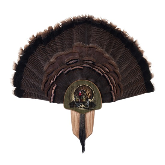 Oak_Turkey_Display_Kit_with_Image_Enhancement_Mounted_Taxidermy_40174