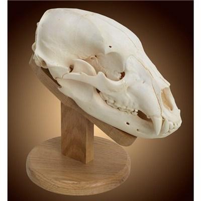 Solid Oak Skull Mount Kit Walnut Hollow Country