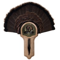 Deluxe Turkey Display Kit, Oak Drumsticks