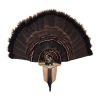 Turkey Display Kit, Oak Strutter