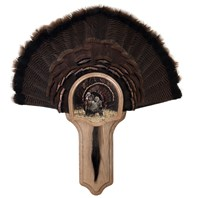 Deluxe Turkey Display Kit, Oak Strutter