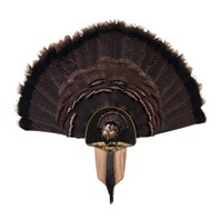 Turkey Display Kit, Oak Full Fan
