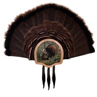 Three Beard Turkey Display Kit, King of Spring
