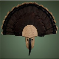 Solid Oak Turkey Mount Kit