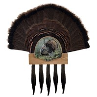 Five Beard Turkey Display Kit, King of Spring