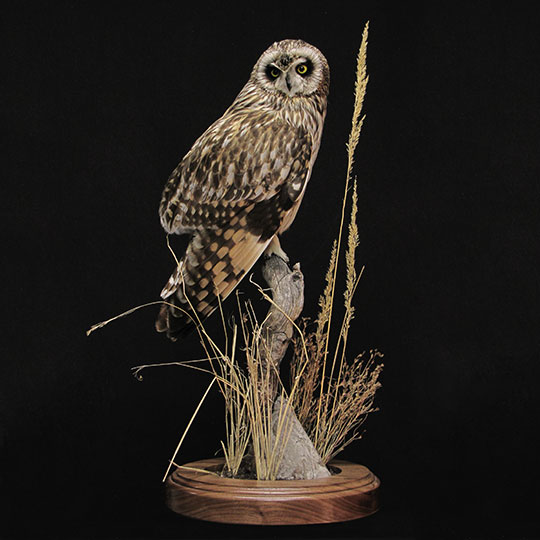 32Owl_professional_taxidermy_mount