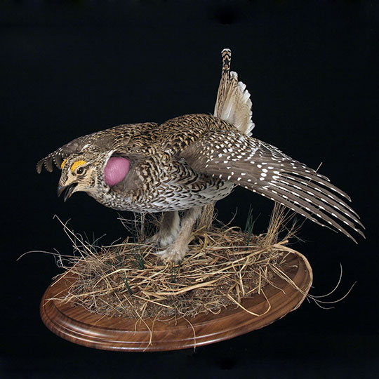40Professional_taxidermy_mount_with_hen