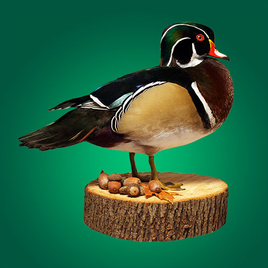 45Reversable-Basswood-Stump-Taxidermy-Base-Wood-Duck-Mount