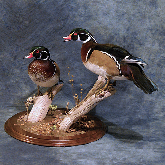 Bo-Nielsen-Flight-feather-Taxidermy-Woodies