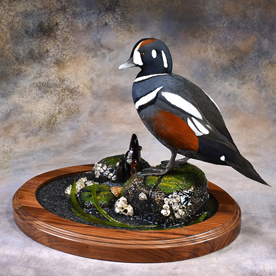 Harlequin_Mount_by_Todd_Huffman–Birdman_Studios_Thick_Walnut_Oval_Base_web