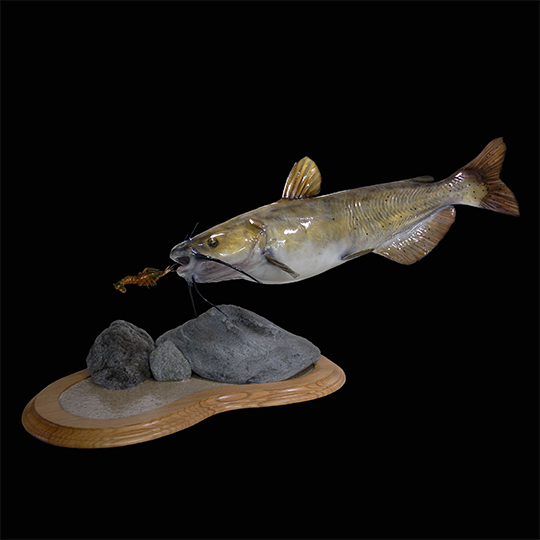Fish reptile mounts fish reptiles photo galleries for How to mount a fish