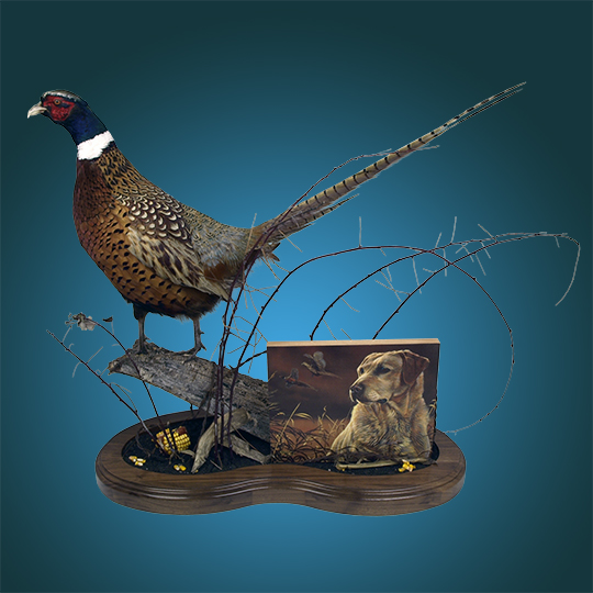 Personalized-Pheasant-Mount-_-Thick-Walnut-Multi-Use-Base-with-Yellow-Lab---Waterfall-Panel