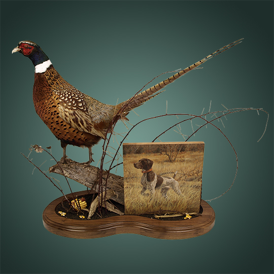 Pheasant-Mount-With-German-Shorthair-Wood-Photo-Mount