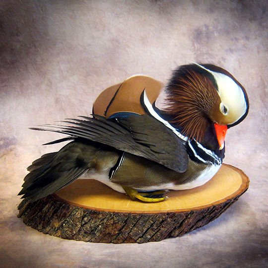 Reversible-Thick-Basswood-Country-Round-Base-Mandarin-Mount