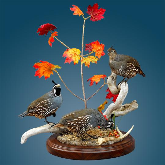 Thick-Oval-Walnut-Taxidermy-Base-Quail-Mount