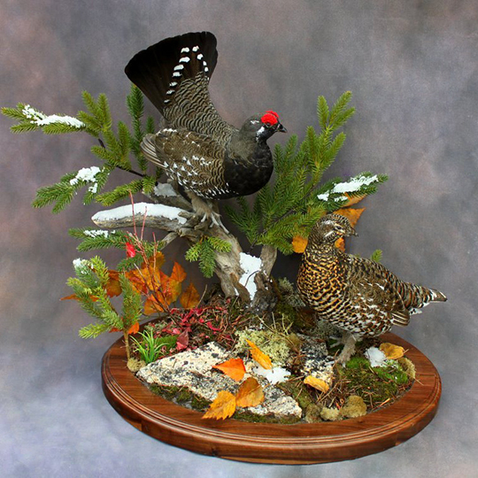 Thick-Round-Walnut-Taxidermy-Base-Quail-Mount