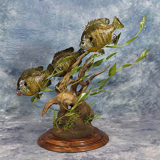 Two-Tier-Round-Walnut-Taxidermy-Base-Fish-Mount
