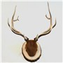 Elk | Mount by Marty DeMoss–Classic Antler Mounts | Basswood Country Round®