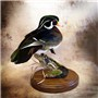 Wood Duck | Mount by Brian Stahl–Aviary Arts Waterfowl | Thick Walnut Round Flat Base