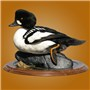 Hybrid Barrows/Common Goldeneye | Mount by Steve Timler | Walnut Round Base