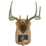 Antler Photo Frame Kits