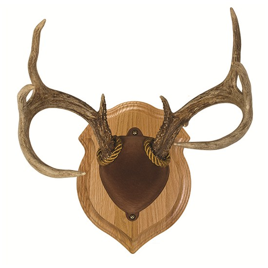 Antler Display Kit