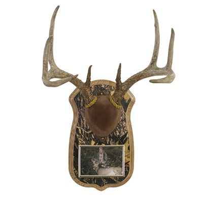 Camo Deluxe Antler Display Kit With Photo Frame Walnut