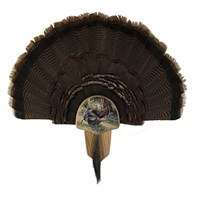 Turkey Display Kit, Oak Osceola