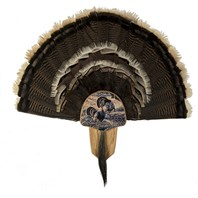 Turkey Display Kit, Oak Merriam's