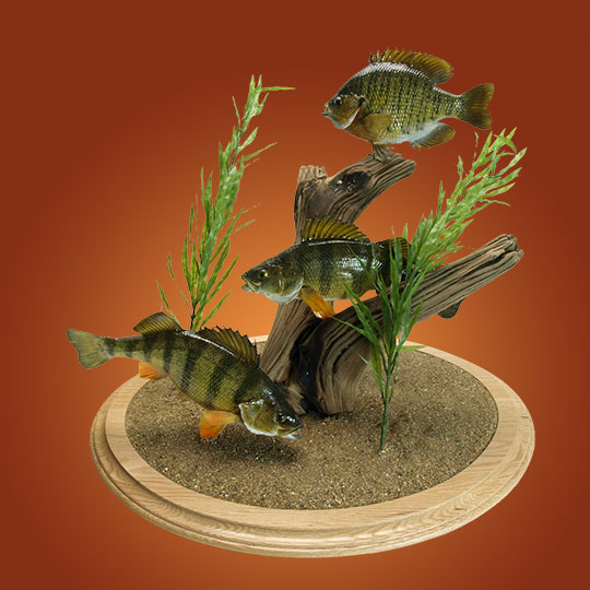 Fish Amp Reptile Mounts Fish Amp Reptiles Photo Galleries